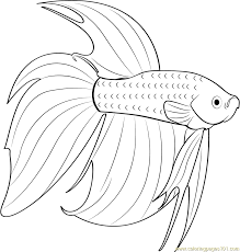 Small Picture Betta Fish Coloring Pages Coloring Pages