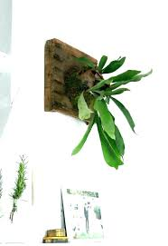 wall plant holders mounted flower pots off the metal hanging hanger prettier than a picture diy