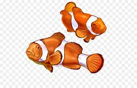 clown fish drawing. Brilliant Drawing Clownfish Nemo Drawing Animal Painting  Painting Inside Clown Fish O