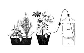 artisanal clay pots from egypt can water your plants for up to a House Plants For Sale artisanal clay pots from egypt can water your plants for up to a month inhabitat green design, innovation, architecture, green building house plants for sale online