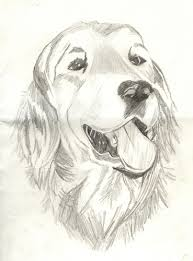 dog sketch images google search old yellerdog