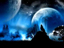 blue wolf background.  Wolf Download And Blue Wolf Background M
