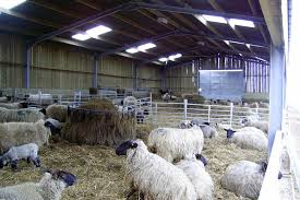 sheep shed designs uk plans mrfreeplans shedplans