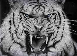 white tiger wallpaper desktop.  Wallpaper Cool White Tigers Wallpaper Background Tiger Wallpaper Hd Wallpaper Desktop  Desktop Images With W