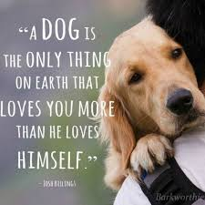 Dog Quotes Love And Loyalty Delectable 48 Heartwarming Dog Quotes About Life And Love FallinPets