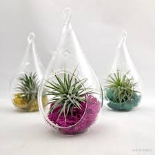 Rummy Plants On Pinterest With Air Plants Air Plant For Air Plants Air  Plant Terrarium in