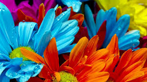 Pictures Of Colored Flowers. Bright Colored Flowers