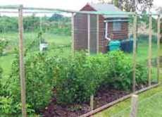 garden bird netting. There Are Lots Of Types Available, From Insect Netting To Bird And Even Deer Netting. The Exact Purpose You Want It For Will Govern What\u0027s Best. Garden