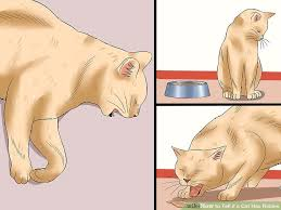 ways to tell if a cat has rabies wikihow image titled tell if a cat has rabies step 1