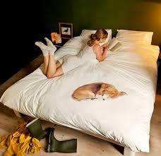 sleeping dog duvet