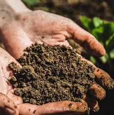 10 tips for preparing your garden for