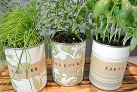 image of small indoor herb planter