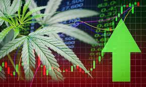 Why Marijuana Stocks Aurora Cannabis Canopy Growth Cronos