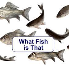 Native Fish Australia