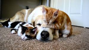 puppies and kittens sleeping.  Puppies A Dog Sleeping With His KITTENS  YouTube Throughout Puppies And Kittens Sleeping