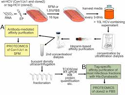 Proteomics Of Hcv Virions Reveals An Essential Role For The