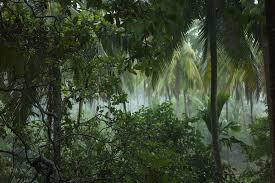 tropical rainforest raining. Fine Tropical Rainforest To Tropical Rainforest Raining