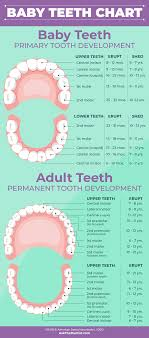 Permanent Teeth Eruption Chart Baby Teeth Eruption Charts When They Fall Out And Proper Care