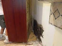 remove black mold molding mold remover