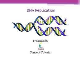 Dna Replication Definition Dna Replication Hindi Youtube