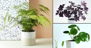 small plants for office. Indoor Small Plants For Office Space S