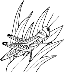 Small Picture The Interesting Insect Coloring Pages Color For Wedding Style