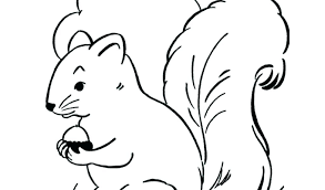 Coloring Pages Cute Squirrel Coloring Pages Pictures To Of