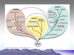 Bacterial Taxonomy