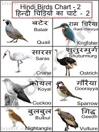Hindi Birds Name Chart Pin By Madhumitha On Learning Languages Hindi Language
