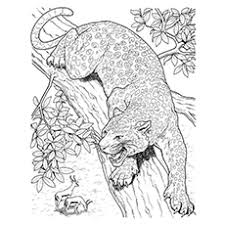 Find thousands of free and printable coloring pages and books on coloringpages.org! 10 Best Free Printable Jaguar Coloring Pages Online