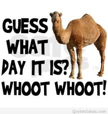 Hump Day Quotes Simple 48 Catchy Hump Day Quotes And Sayings Collection Myusapics