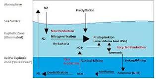 Nitrogen Cycle Wikipedia