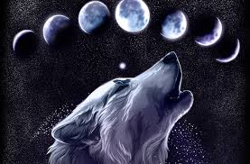 Only the best hd background pictures. Cool Wolf Wallpapers For Pc Page 1 Line 17qq Com