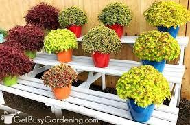 21 best container plants for pots