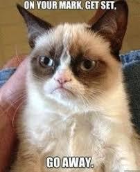 grumpy cat good smile.  Good Tardersauce Words Of Wisdom Throughout Grumpy Cat Good Smile Pinterest