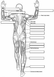 Small Picture Anatomy Coloring Pages Bestofcoloringcom
