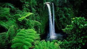 Best Wallpapers Nature Green ...