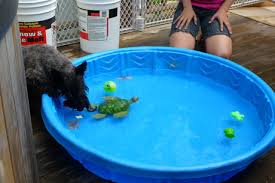 plastic pools for kids. Brilliant Kids Plastic Noninflatable Kid Pool Needed Memphis Collierville Home  Depot Live Shop  Tennessee TN CityData Forum To Pools For Kids I
