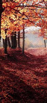 25++ Autumn Wallpaper Iphone Xs Max ...