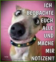 62 Großartig Von Sprüche Hund Lustig