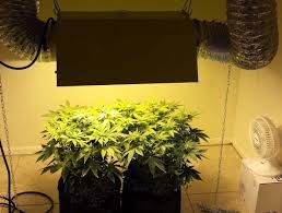 which reflector is best for my mh hps grow light