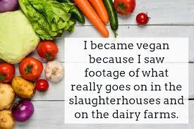 Vegan Quotes Impressive Vegan Quotes Text Image Quotes QuoteReel
