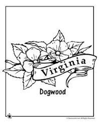 Small Picture State Flower Coloring Pages Texas State Flower Coloring Page