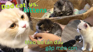 Vệ Sinh Lông Mèo Máy lọc Không Khí