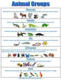 175 Best Vertebrates And Invertebrates Images Vertebrates