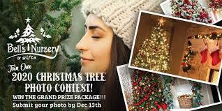 Bell's Nursery <b>Christmas Tree</b> Photo Contest - Anchorage Daily News