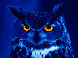 Image result for ufos and owls]