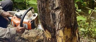 Things To Expect When Hiring A Tree Removal Service