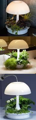 Kitchen Grow Lights 17 Best Ideas About Grow Lights On Pinterest Plant Grow Lights