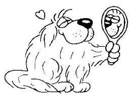 De Hondenkapper Zeeburgereiland Home Facebook